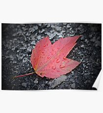 The Last Fall Leaf Poster