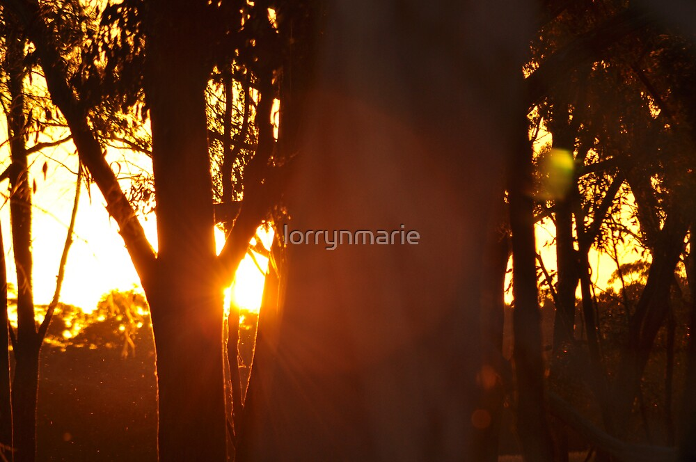 Afternoon glow by lorrynmarie