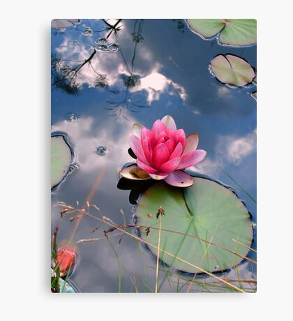 Lily in a reflected sky Canvas Print