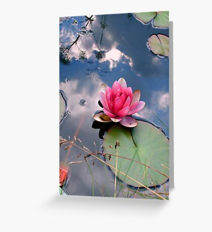 Lily in a reflected sky Greeting Card