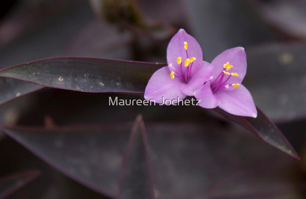 Purple Heart by Maureen Jochetz