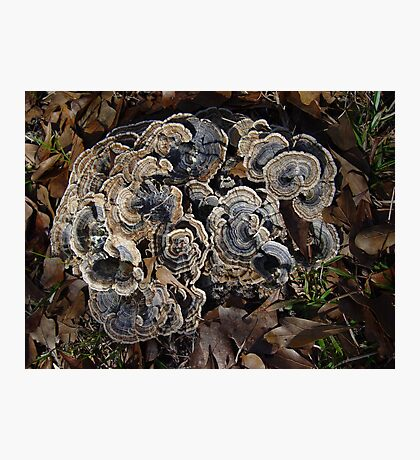 Turkey Tails Photographic Print
