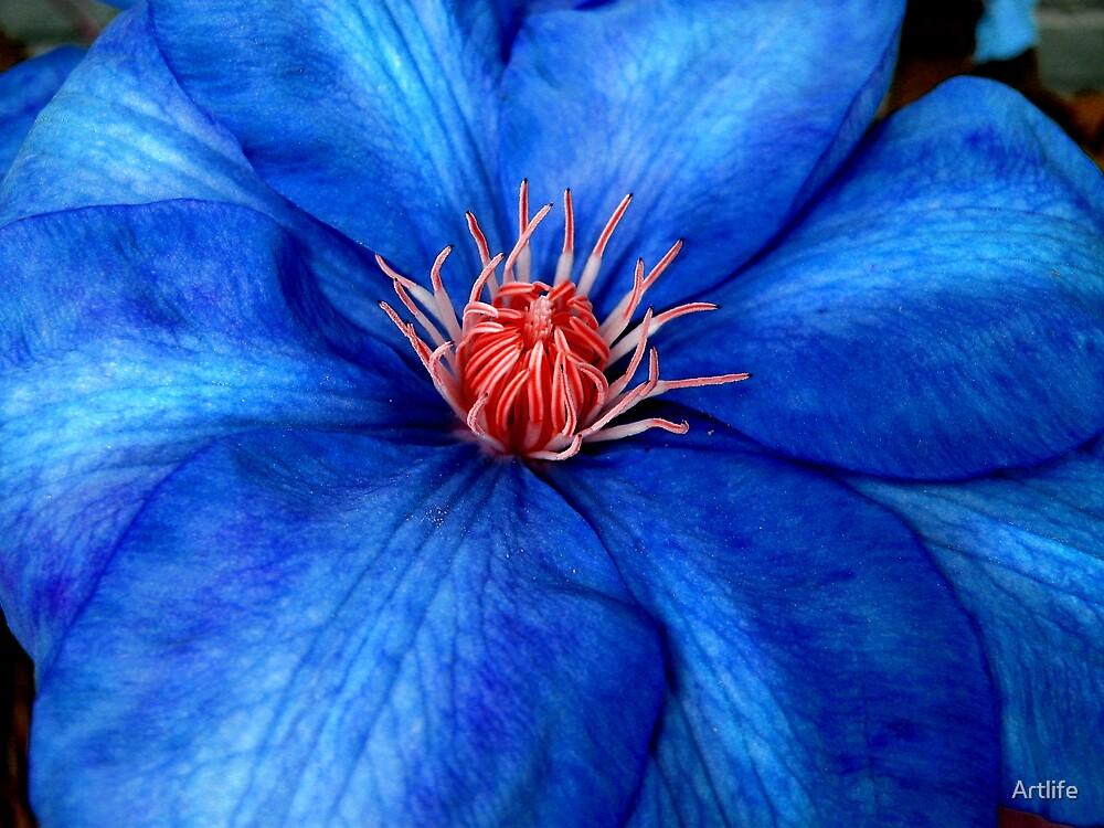 Blooming  Big Blue by Artlife