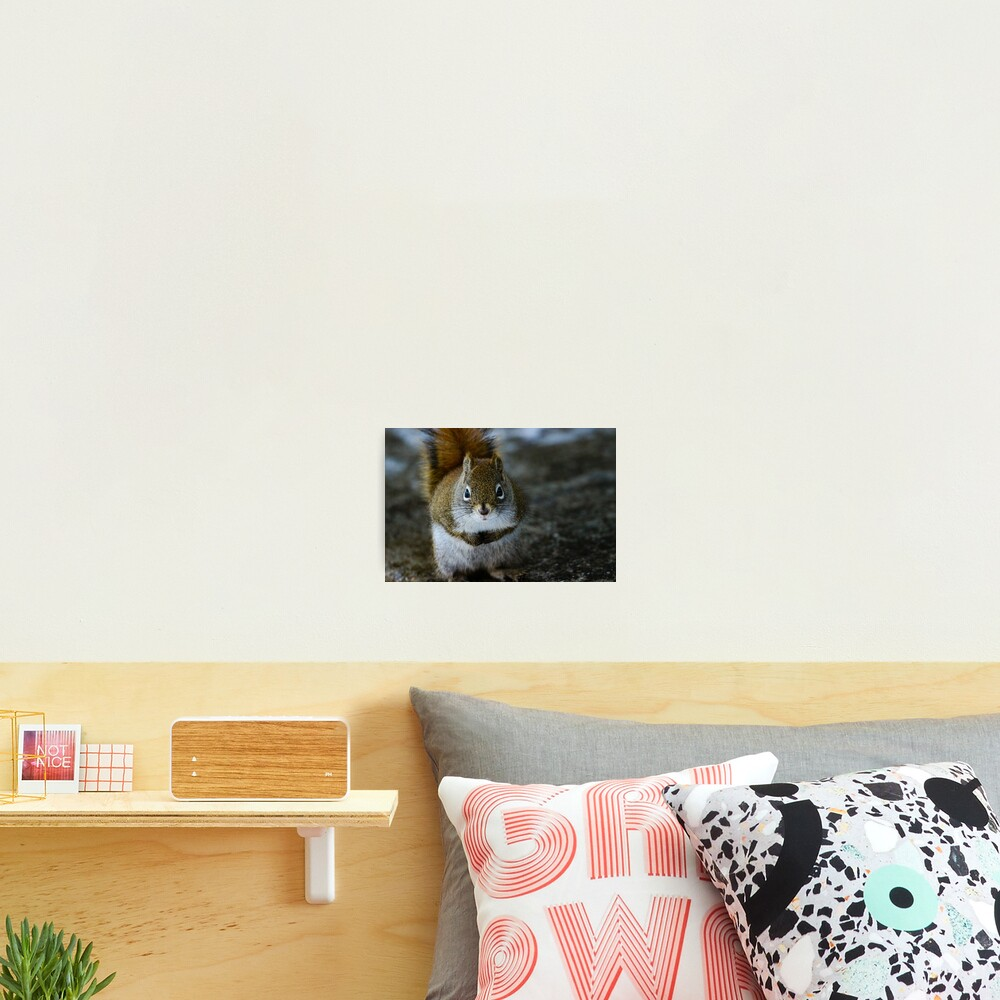 Squirrel Day Photographic Print