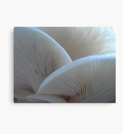 Oyster Mushrooms Canvas Print