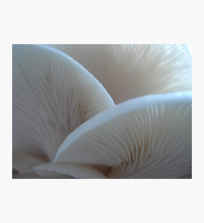 Oyster Mushrooms Photographic Print