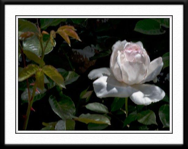 Dawn's Garden #3 by BOB SNELL