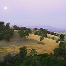 Twilight Moon by Joel McDonald