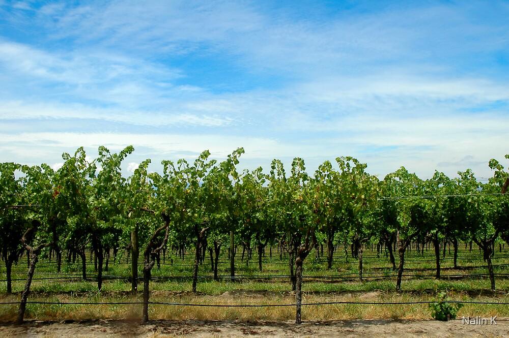 Green Grapes and Blue sky! by Nalin K