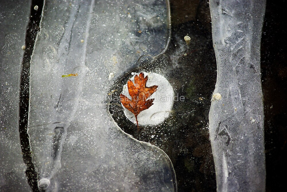 Leaf in Ice by Nasibu Mwande
