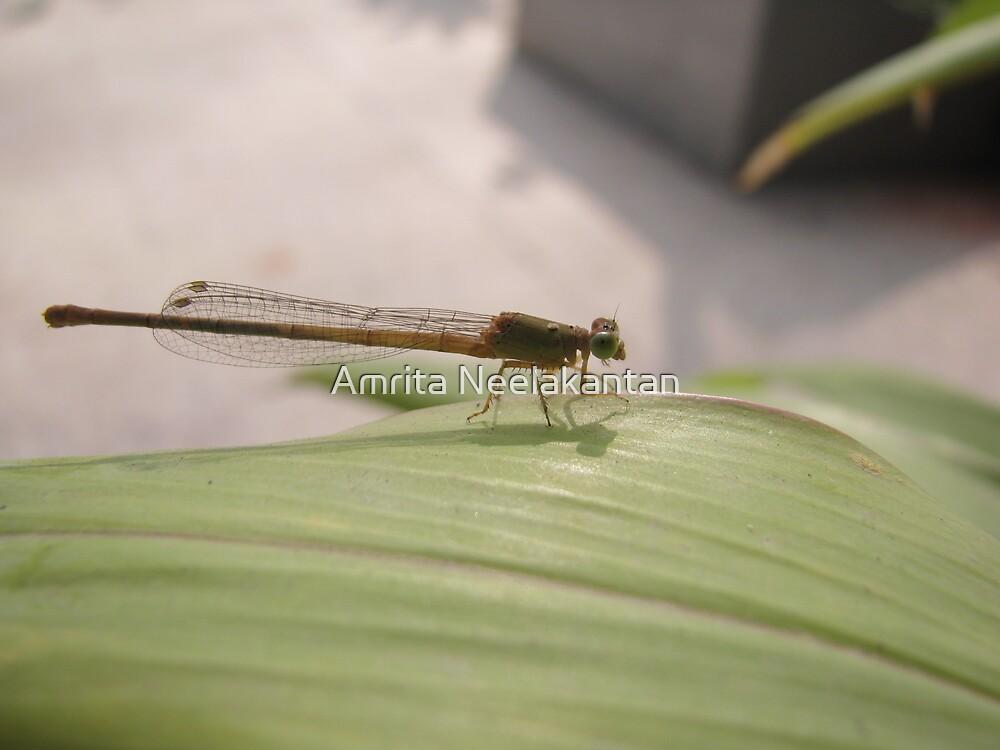 Green eyes by Amrita Neelakantan