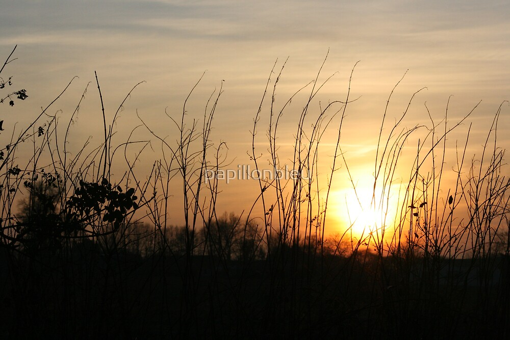 Sunset Silhouettes - Hedgerow by Pamela Jayne Smith