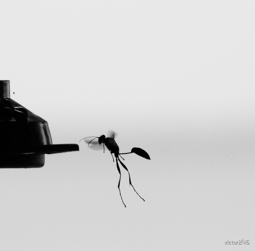 Wasp by victor246