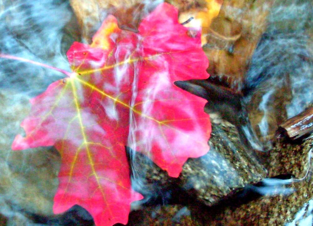 red leaf on green rock by Julie Gappmayer