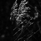 Mirror Grass by kernuak