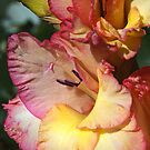 Gladiolus Delight by Joy Watson