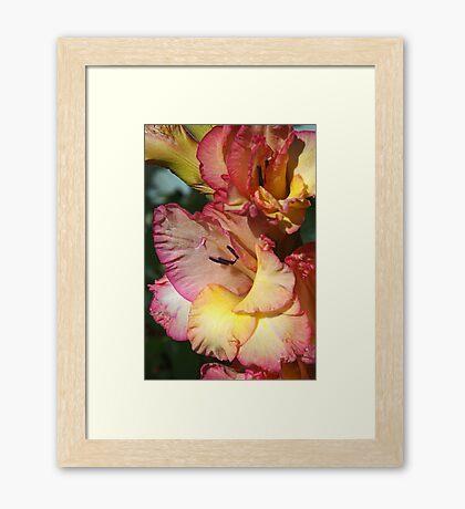Gladiolus Delight Framed Print