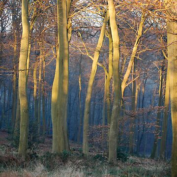 Oxfordshire Woods by Englandken