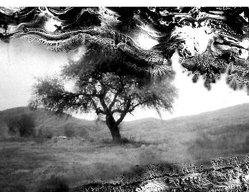 Winter tree by jonaphoto