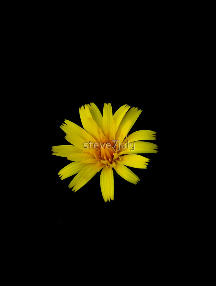 Yellow on Black by steve7july