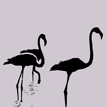 Three Flamingos Black Silhouette Isolated by taiche