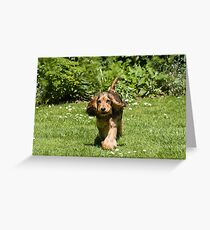 English Show Cocker Spaniel Puppy Ears Flapping Greeting Card