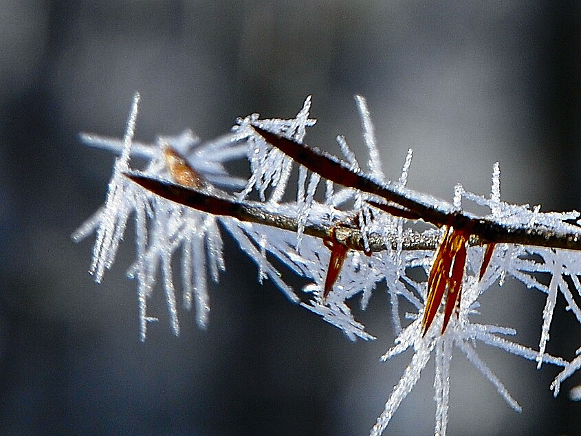 Ice thorns  by tyroler