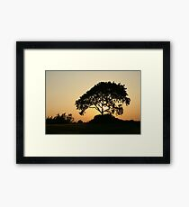 Sunset with a Tree Framed Print