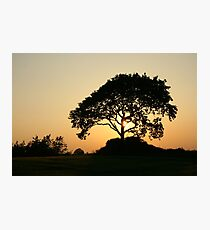 Sunset with a Tree Photographic Print