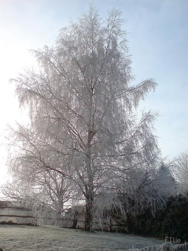 Frosted Tree by E11ie