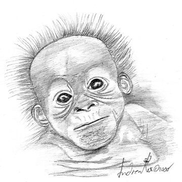 Orangutan Baby by AndreaKos