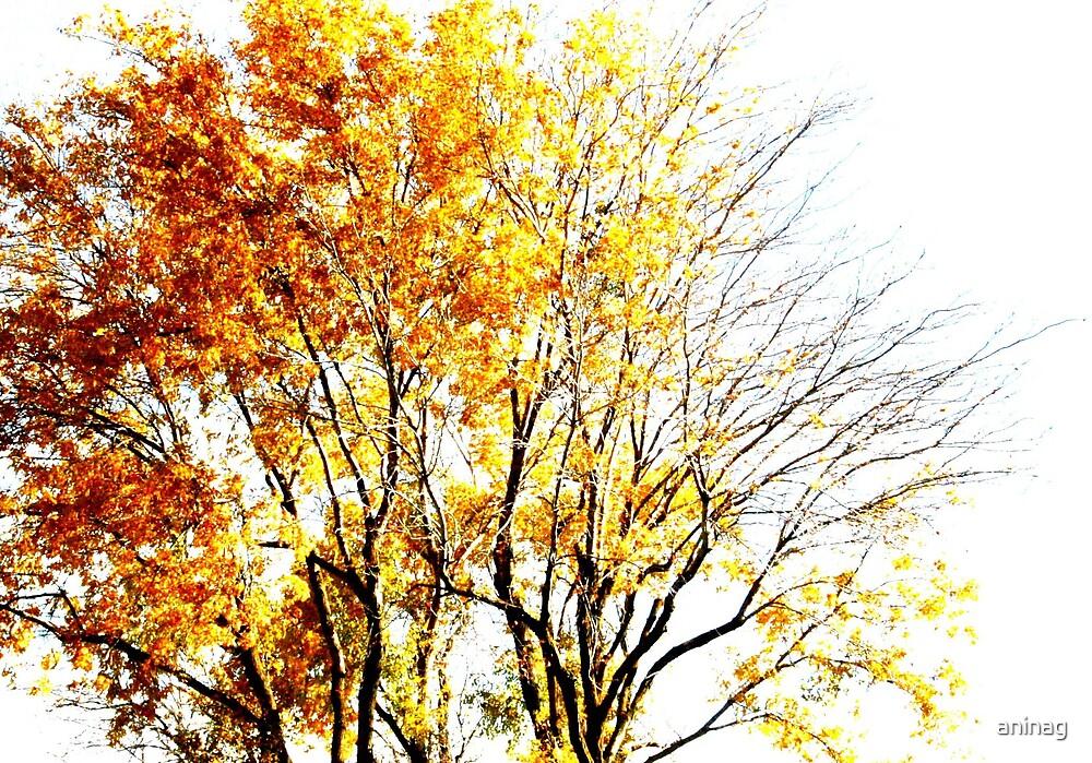 Fall by aninag