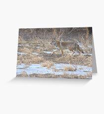 Quixotic Coyote Grußkarte