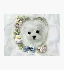 Hermes the Maltese Puppy Photographic Print