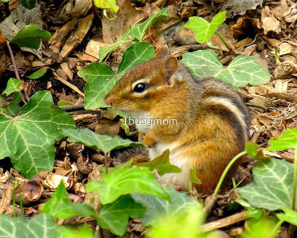 chipmunk in the garden by 1busymom