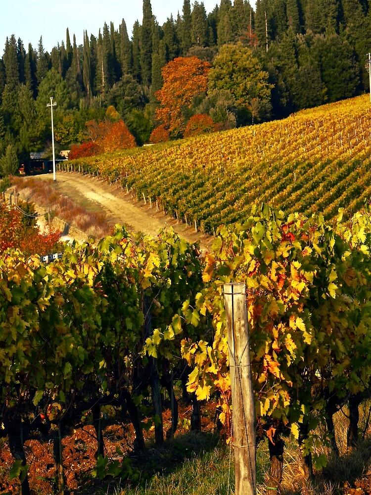 Tuscan Vineyard by Rae Tucker