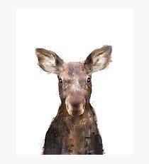 Little Moose Photographic Print