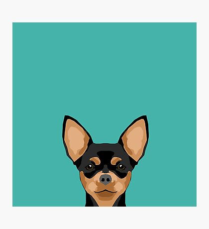 Chihuahua dog head pet portrait cute pet art chiwawas dog breed pure breeds Photographic Print