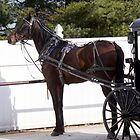 Amish Horse and Buggy In Lancaster County, Pennsylvania by Polly Peacock