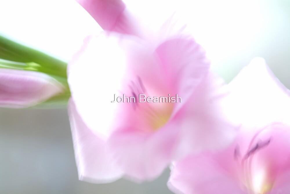 Pink Glad by John Beamish