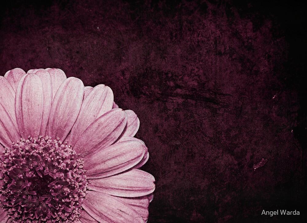 shy by Angel Warda