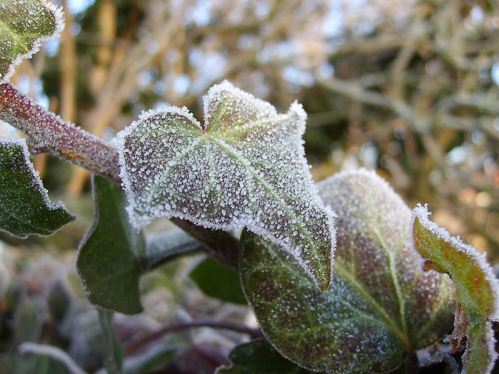Frosty Ivy by GardeningArcher