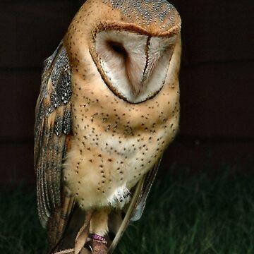 Barn Owl by Yampimon