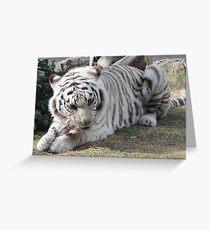 white tiger eating Greeting Card