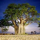 Boab Blue by The Mattmosphere