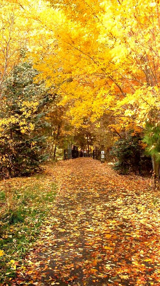 Farmington Trail in Autumn by Julie Gappmayer