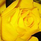 Rose by Kim Edmonds