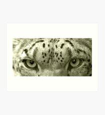 Snow Leopard Eyes Art Print