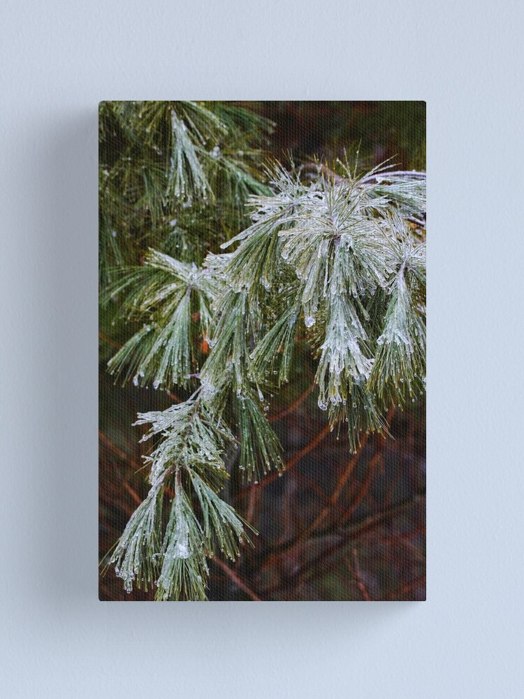 Alternate view of Winter Pine Canvas Print