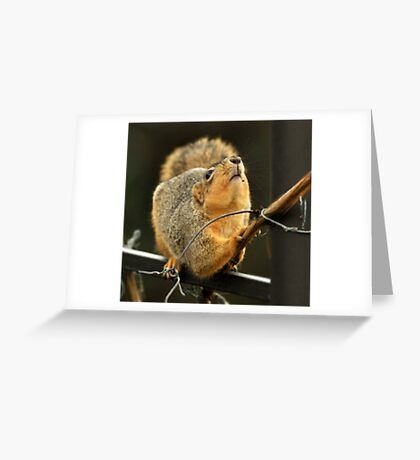 Cute Thief Greeting Card